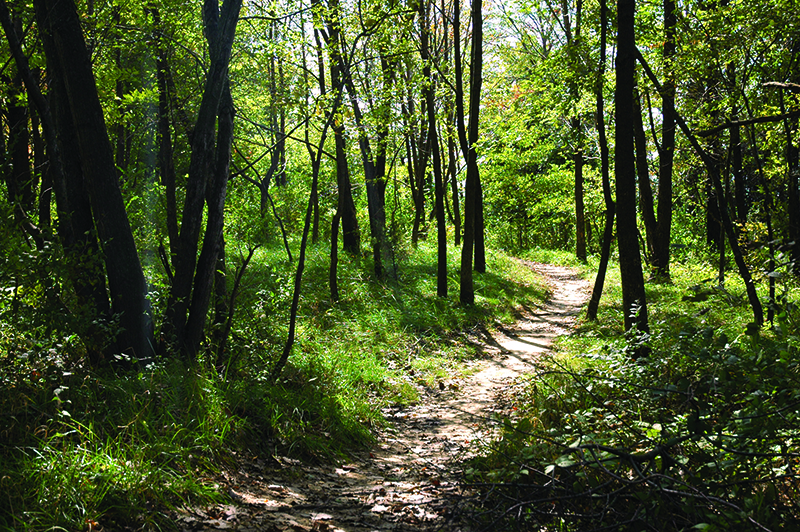 Adams Wildlife Sanctuary