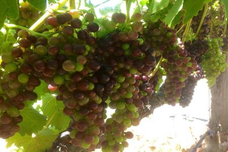 Image of Rock Creek Vineyards