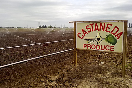 Image of Castaneda Brothers Produce
