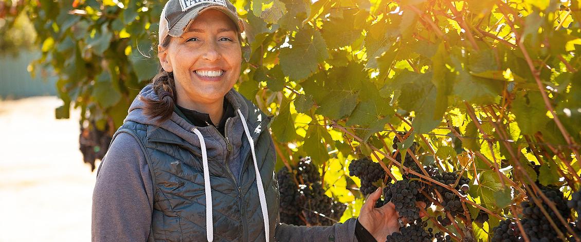 Image of Tolenas Vineyards & Winery