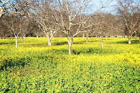 Image of Cal Yee Farms