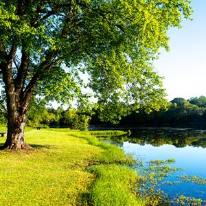 Cardin's Lake image